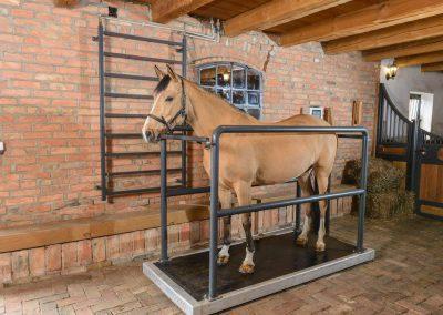 Vibrationsplatte für Pferde