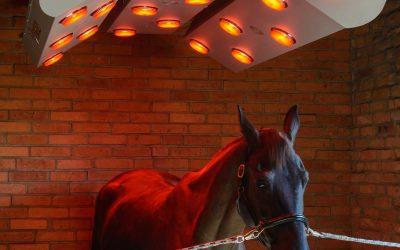 Pferdesolarium – neu bei uns im Programm !