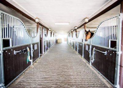Pferdeboxenfront MADRID