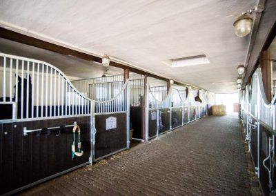 Pferdebox MADRID